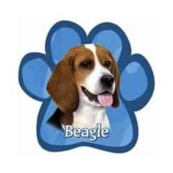 Beagle Car Magnet