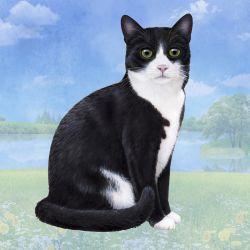 black and white cat Stone Coasters