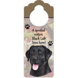 Labrador, black