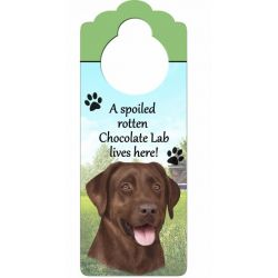 Labrador, chocolate