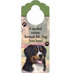 Bernese Mt. Dog