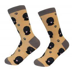 Labradoodle, Black Socks
