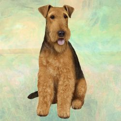 Airdale Terrier Sitting Stone Coasters