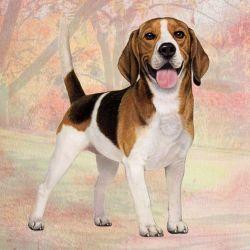 Beagle Standing Stone Coasters