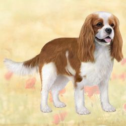 Cavalier King Charles Standing Stone Coasters