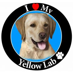 Labrador, yellow