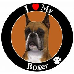 Boxer, Cropped