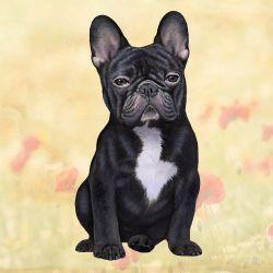 French Bulldog Black Sitting Stone Coasters