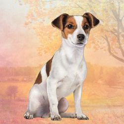 Jack Russell Sitting Stone Coasters