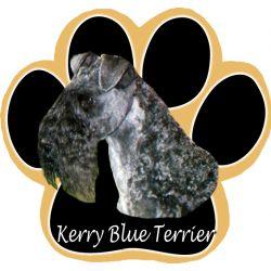 Kerry Blue TerrierMousepad