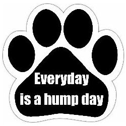 Everyday is a hump day Car Magnet