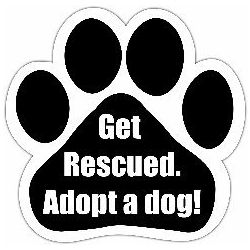 Get rescued. Adopt a dog! Car Magnet