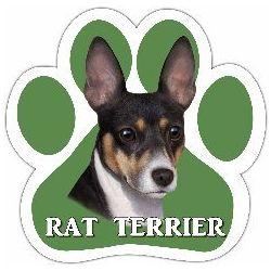 Rat Terrier Car Magnet