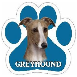 Greyhound, fawn and white Car Magnet