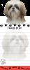 Shih Tzu, tan and white puppy cut