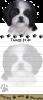 Shih Tzu, black and white puppy cut